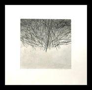 luz entre pinos