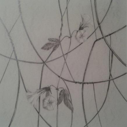 ipomoea diurno 1 28x28Isamat_Artwork