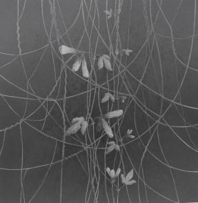 ipomoea nocturn 1 60x60Isamat_Artwork